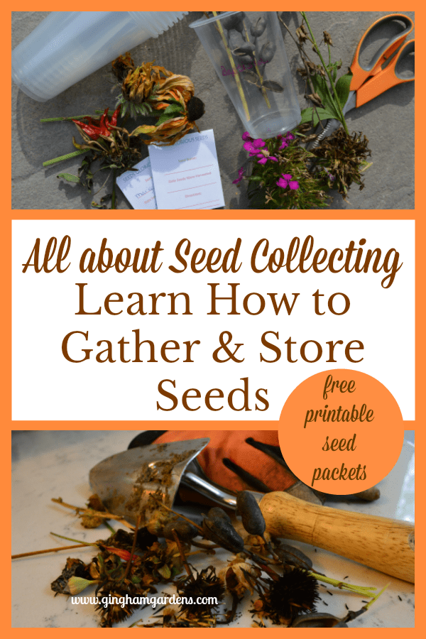 How to Collect & Store Flower Seeds
