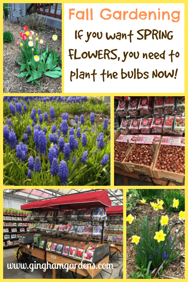 Plant BULBS in the FALL for SPRING FLOWERS