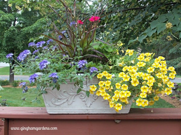 Deck Rail Planter filled with calibrachoa, verbena, purple fountain grass and geranium