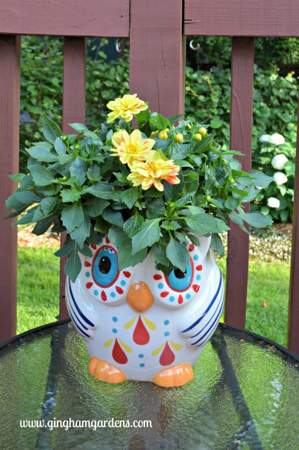 Owl Flower Pot in Creative Flower Container Gardening