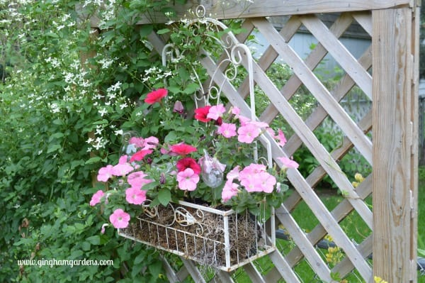 Iron Planter with Petunias hanging on a fence
