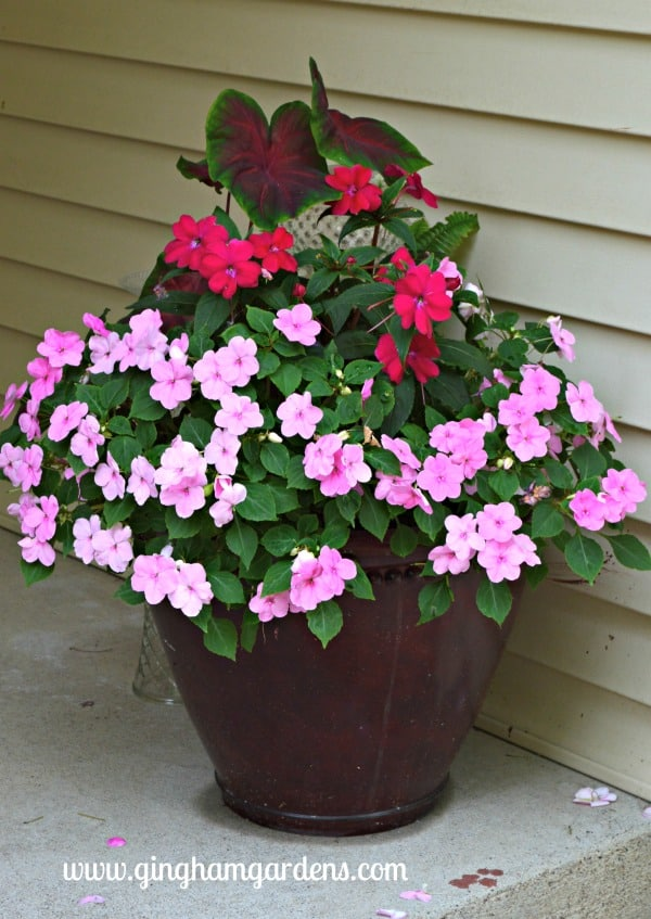 Flower Container Garden for Shade