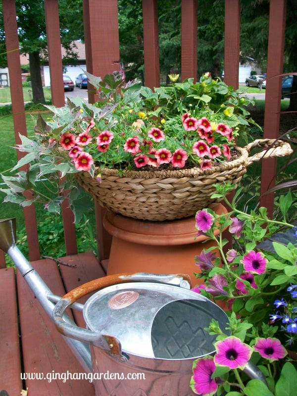 Flower Container Gardens Grouping