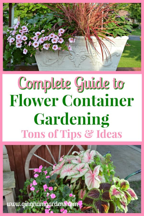 Complete Guide to Flower Container Gardening