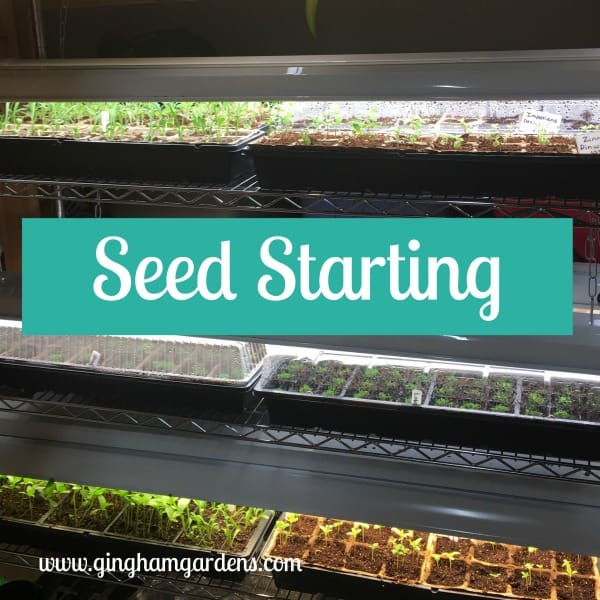 Seed Starting Indoors - Activities for Gardeners in Winter