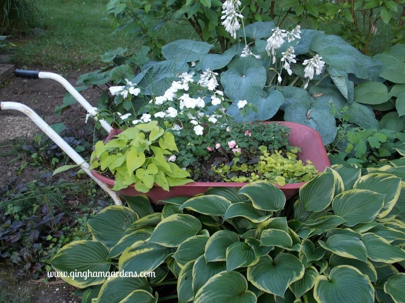 Upcycled Wheelbarrow Turned Planter