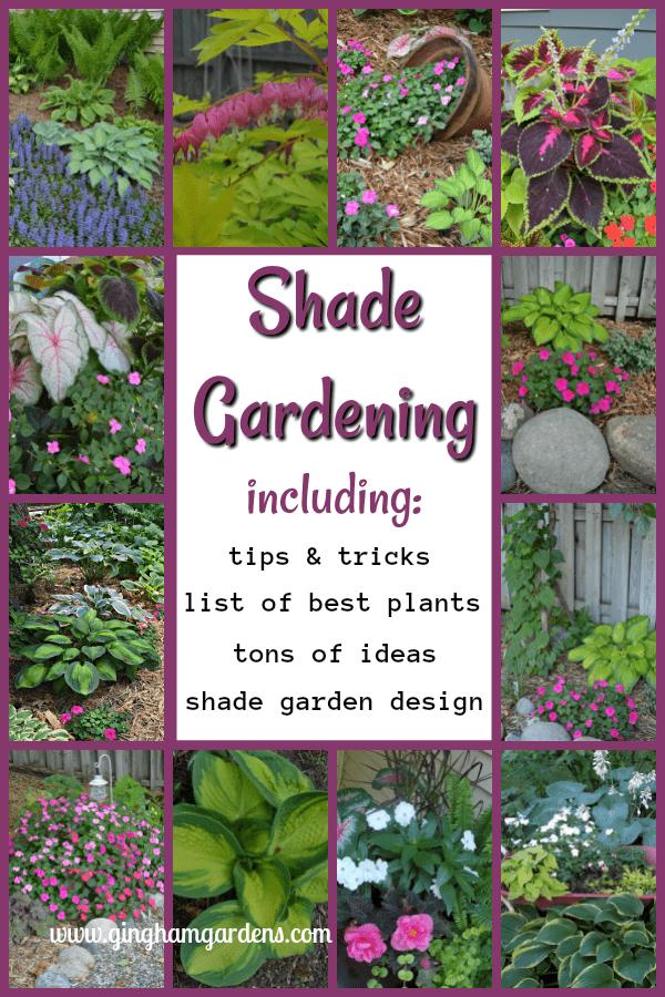 Shade Gardening - Tips & Tricks