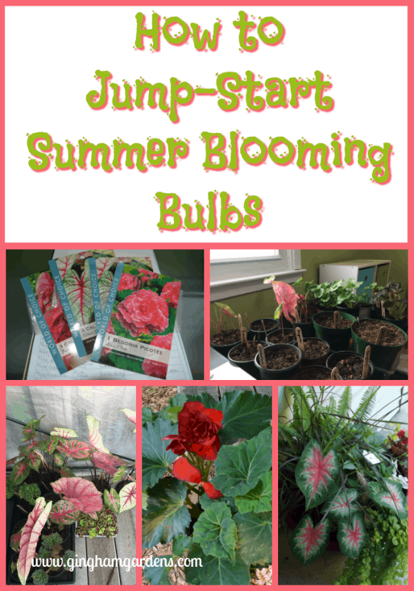 Learn How to Jump Start Summer Blooming Bulbs