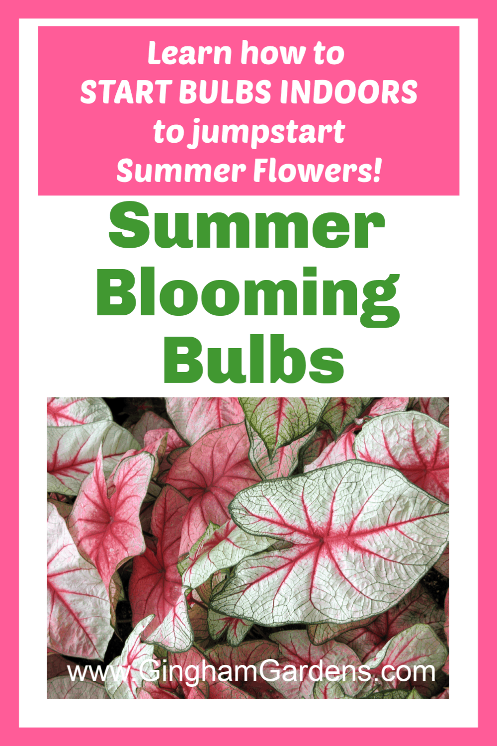 Image of Caladium Plants with Text Overlay - Summer Blooming Bulbs
