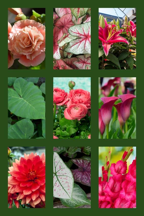 Images of Summer Flower Bulbs