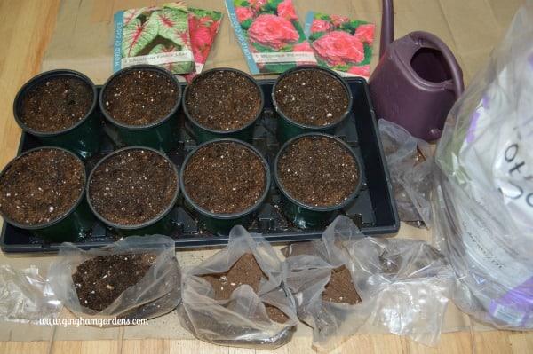 Starting Summer Blooming Bulbs Indoors
