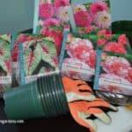 Summer Blooming Bulbs - Learn How to Start Bulbs Indoors