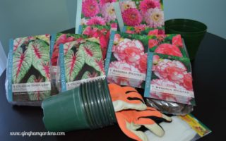 Summer Blooming Bulbs - Learn How to Start Bulbs Indoors