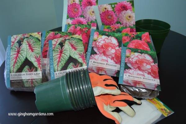 How To Jump Start Summer Blooming Bulbs Gingham Gardens