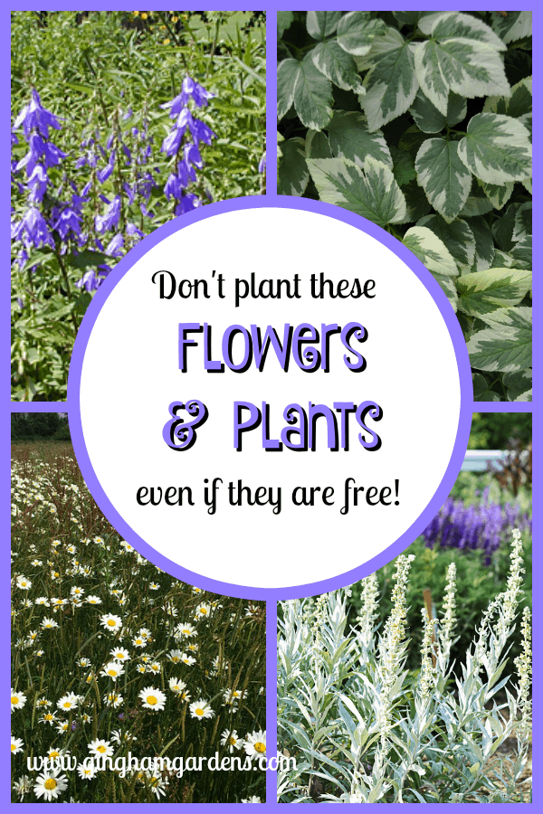 Don't Plant These Flowers & Plants Even If They Are Free