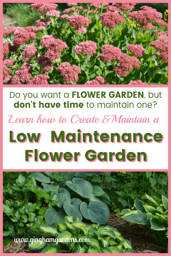 Low Maintenance Flower Garden - How to Create & Care For