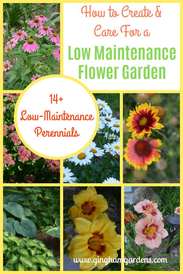 14+ Low Maintenance Perennial Flowers