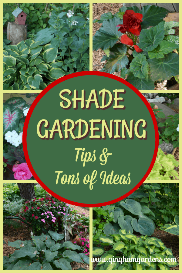Shade Gardening - Tips & Tons of Ideas