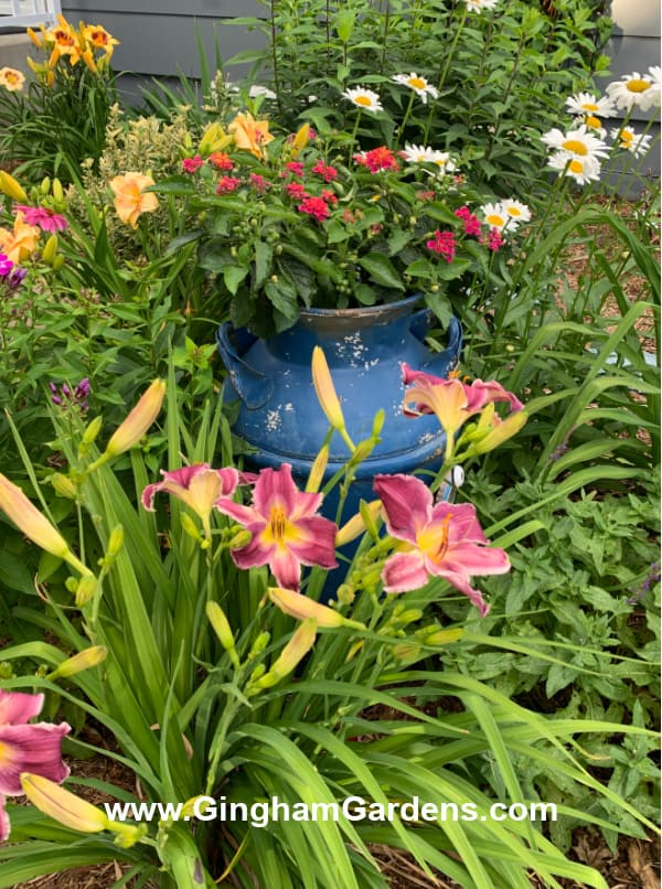 Image of a vintage milk can in a flower garden.