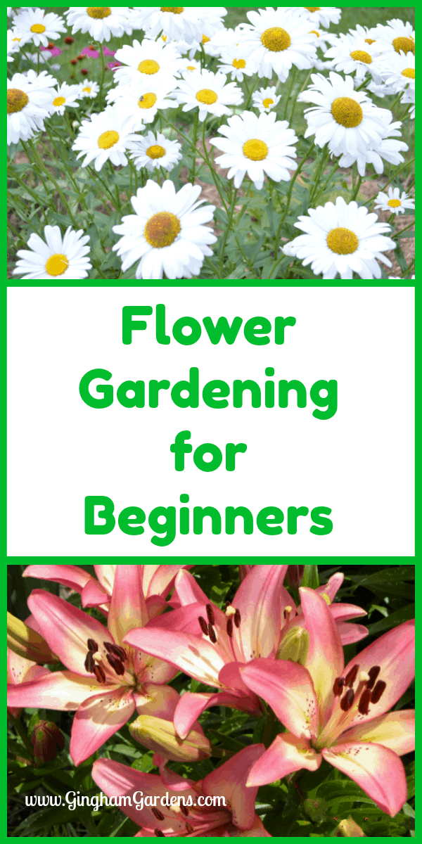 Flower Gardening for Beginners