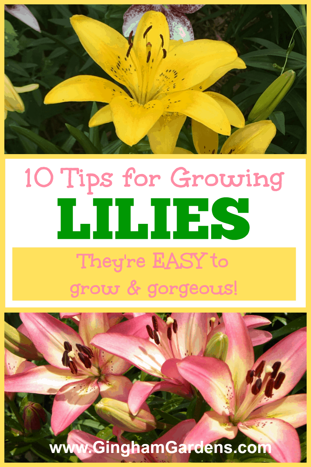 10 Tips for Growing Lilies