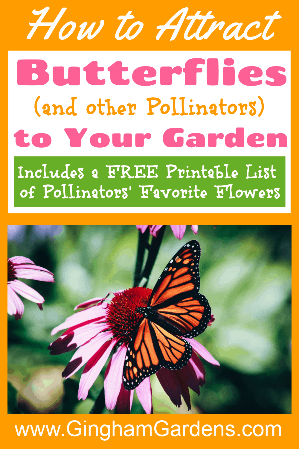 Image of a butterfly on a flower with text overlay - how to attract butterflies to your garden