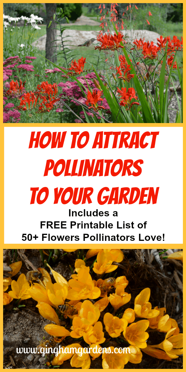 Flowers with Pollinators - How to Attract Pollinators to Your Garden