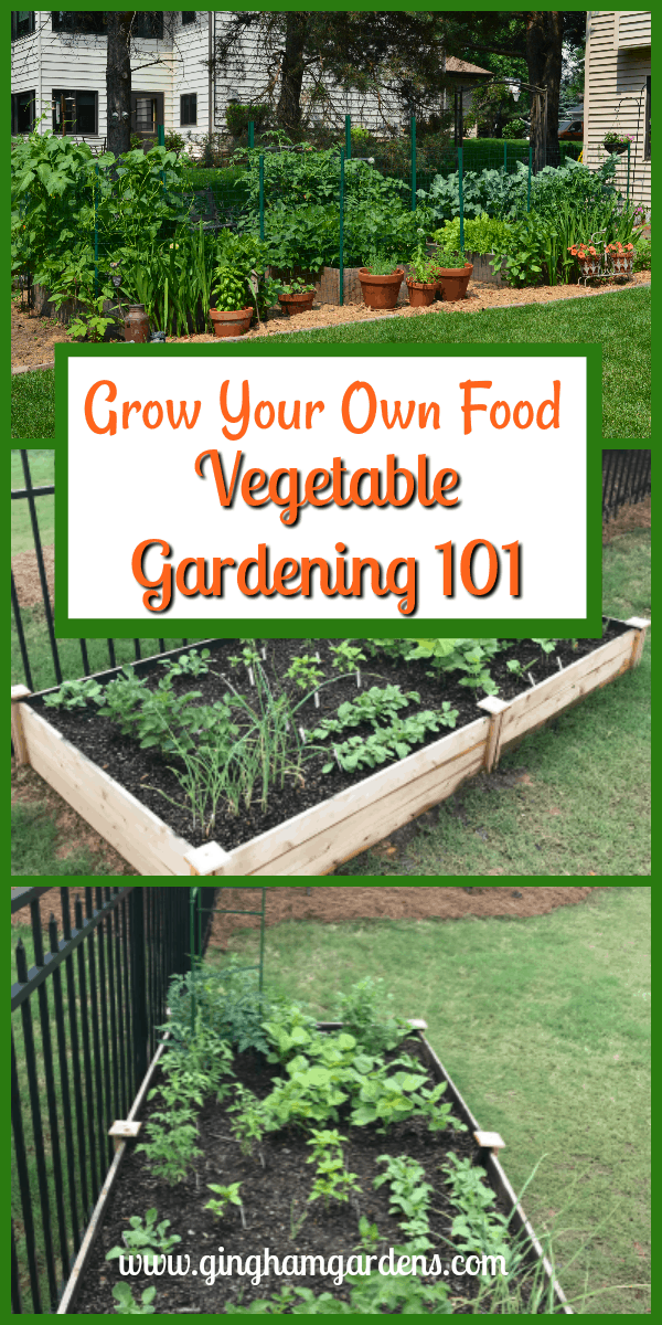 Vegetable Gardening 101 - Learn to Grow Your Own Food