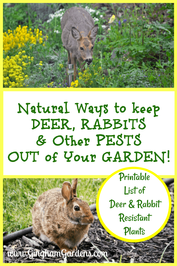 Deer & Rabbit in Garden - Natural Ways to Keep Deer, Rabbits & Other Pests out of Your Garden