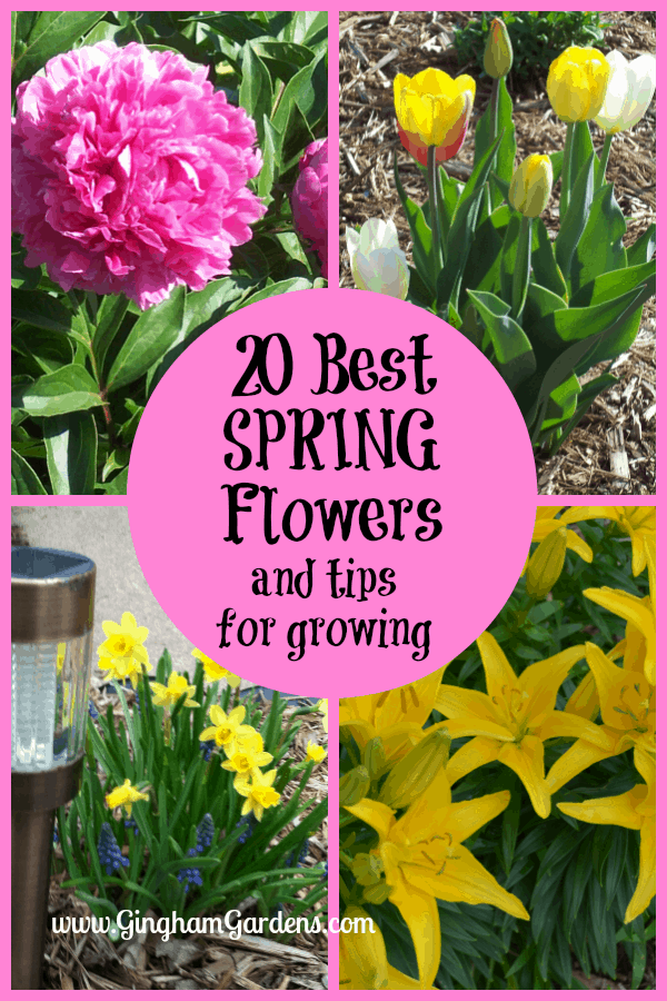 Spring Flowers - 20 Best Spring Flowers and Tips for Growing