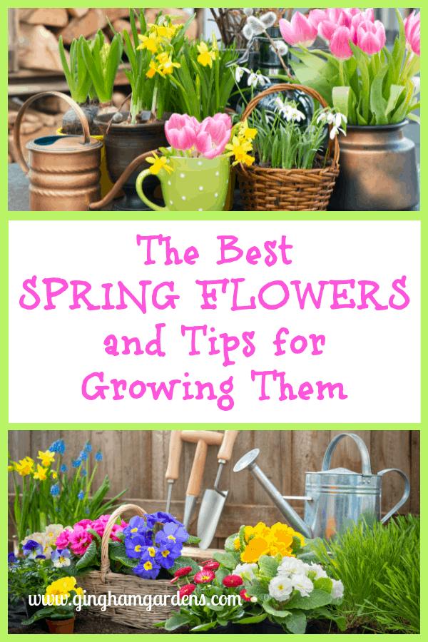 Spring Flower Vignette