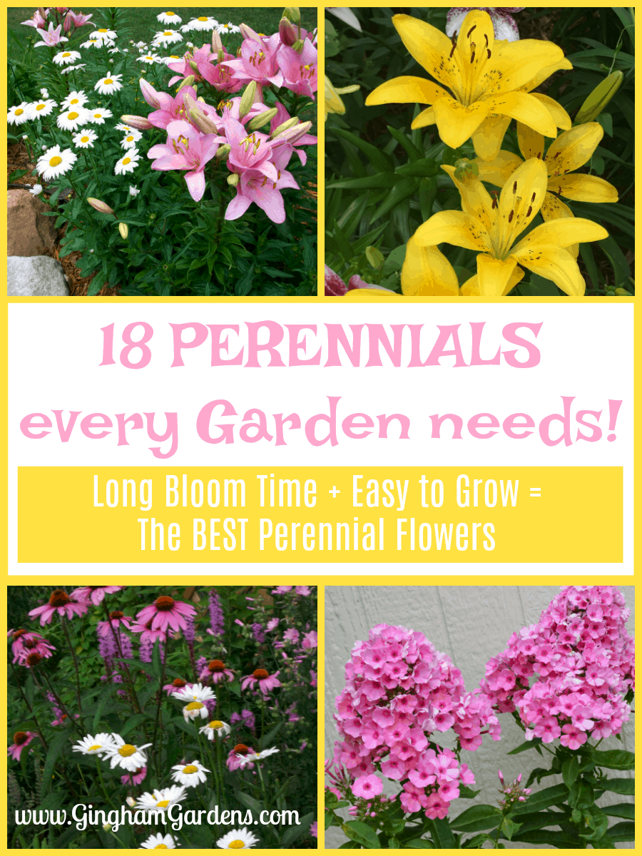 The Best Perennial Flowers Every Garden Needs