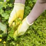 How to Deal With Weeds In Your Garden