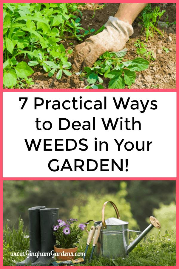 7 Practical Ways to Deal With Weeds In Your Garden