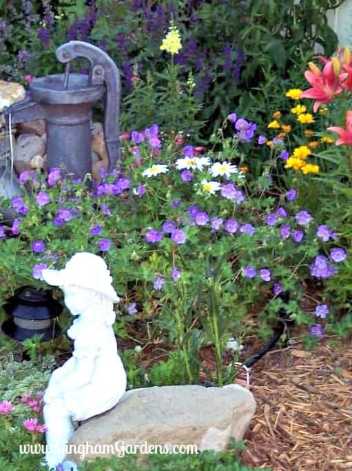 Classic Perennials - Jolly Bee Cranesbill