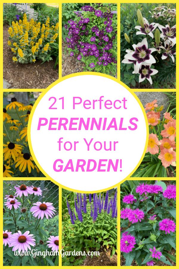 Classic Perennials That Every Flower Garden Needs Gingham Gardens