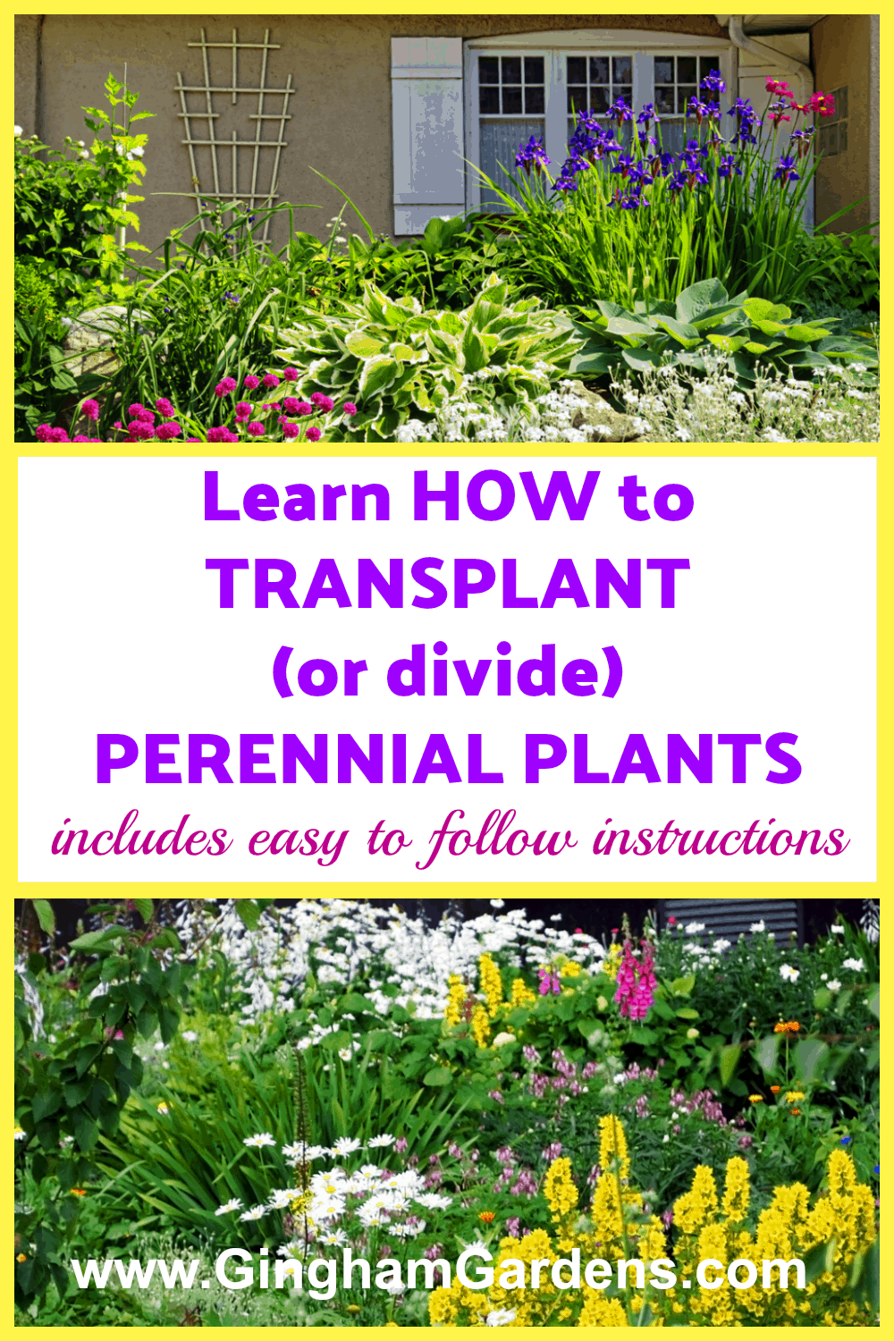 How to Transplant Perennial Plants