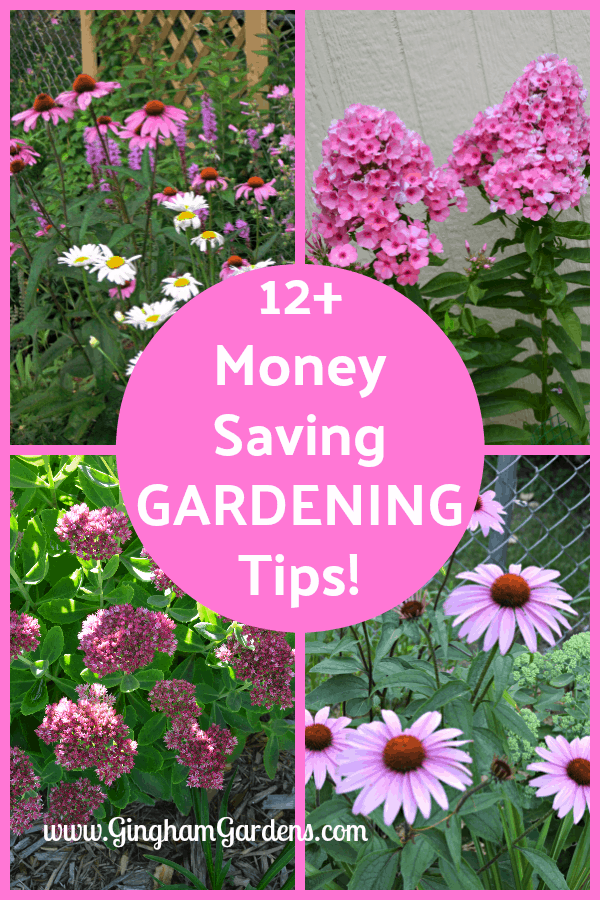 12+ Money Saving Gardening Tips
