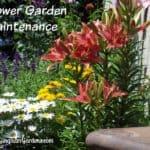 Flower Garden Maintenance