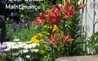 Flower Garden Maintenance