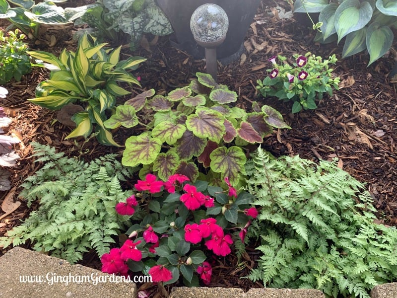 Shade Garden Makeover After