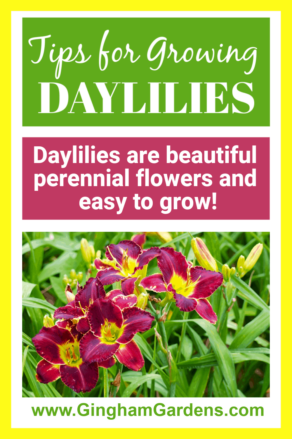 Image of Daylilies with Text Overlay - Tips for Growing Daylilies