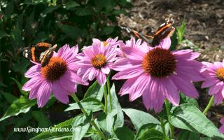 Summertime in the Gardens