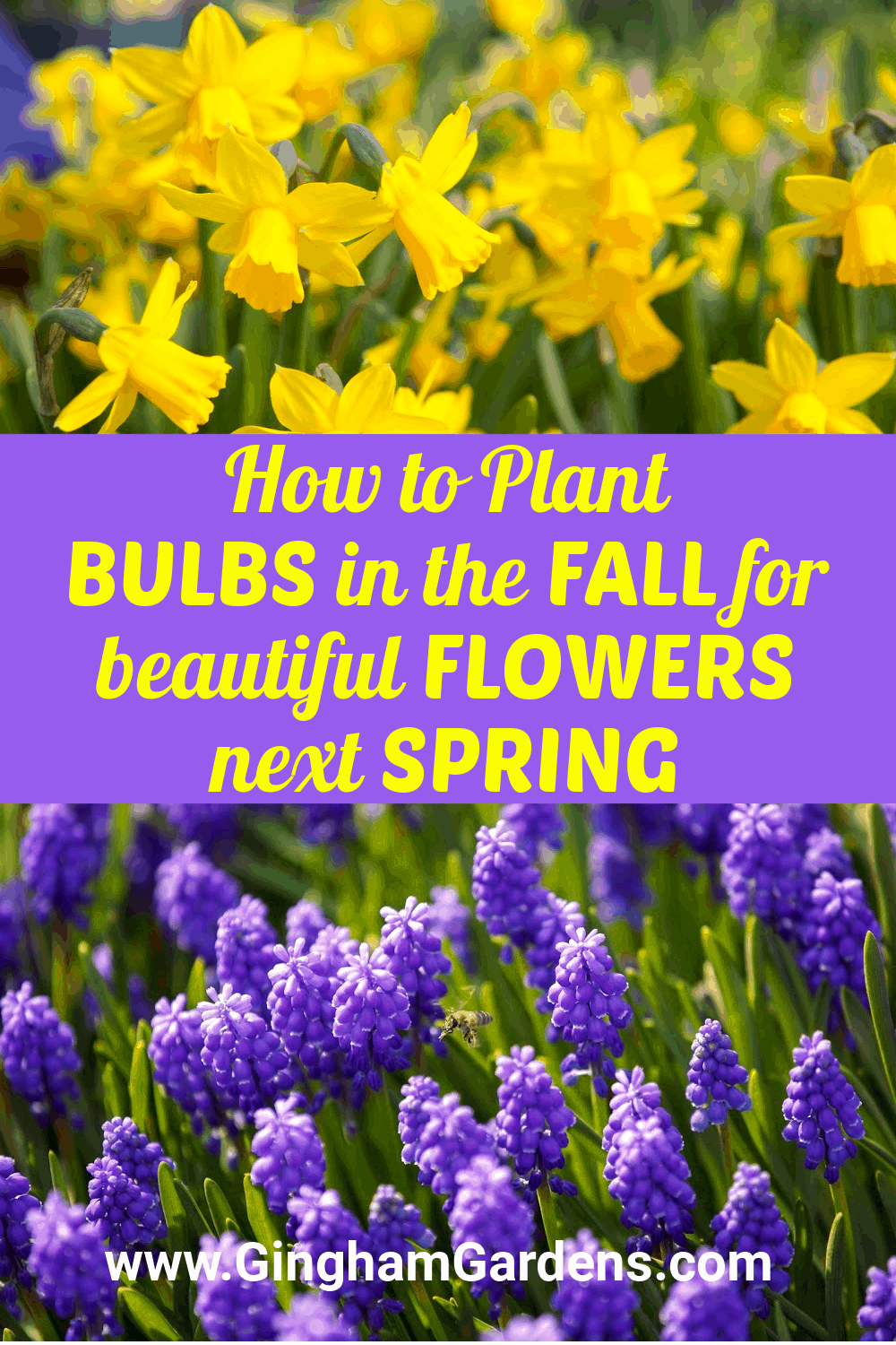Images of Spring Flowers with text overlay - How to Plant Bulbs in the Fall for beautiful flowers next spring