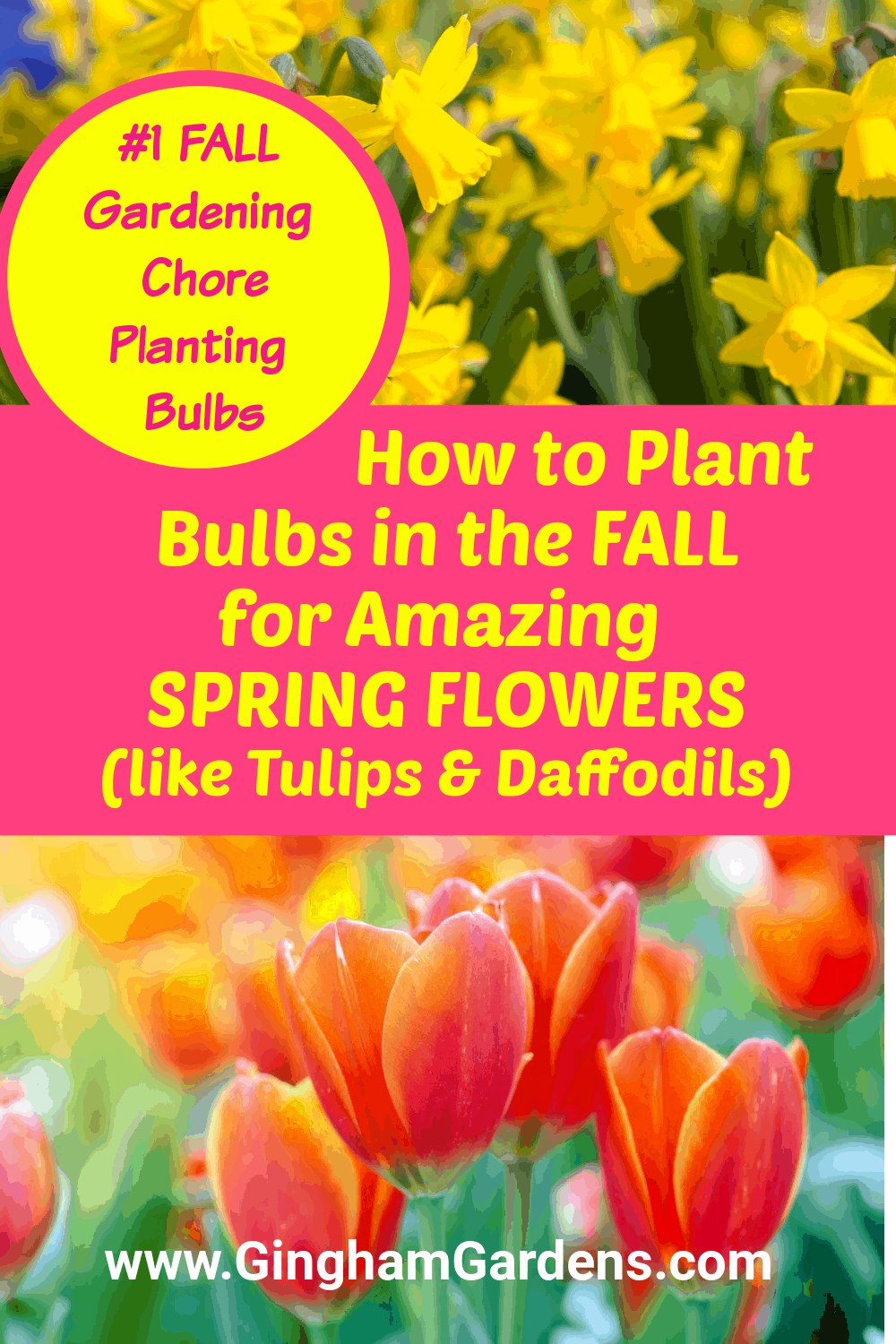 Images of Spring Flowers with text overlay - How to Plant Bulbs in the Fall for Amazing Spring Flowers
