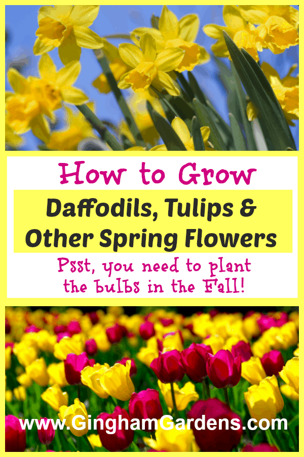 How to Grow Spring Flowers