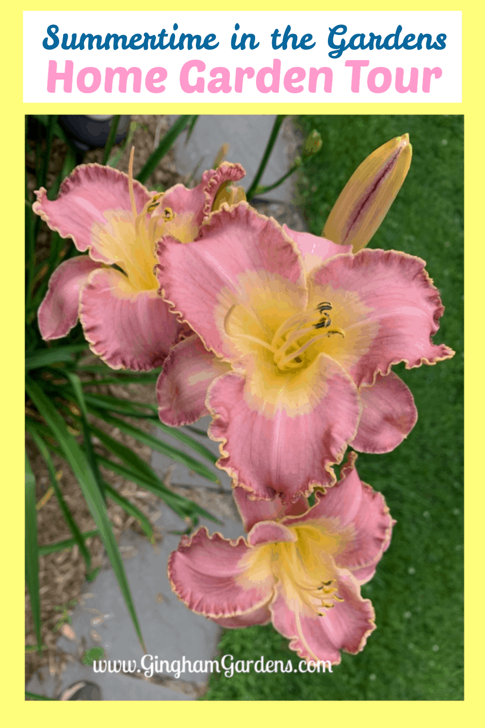 Image of Daylilies with text overlay - Summertime in the Gardens - Home Garden Tour