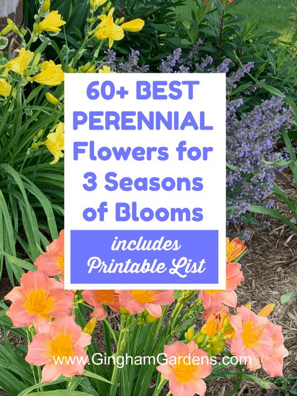 Best Perennial Flowers