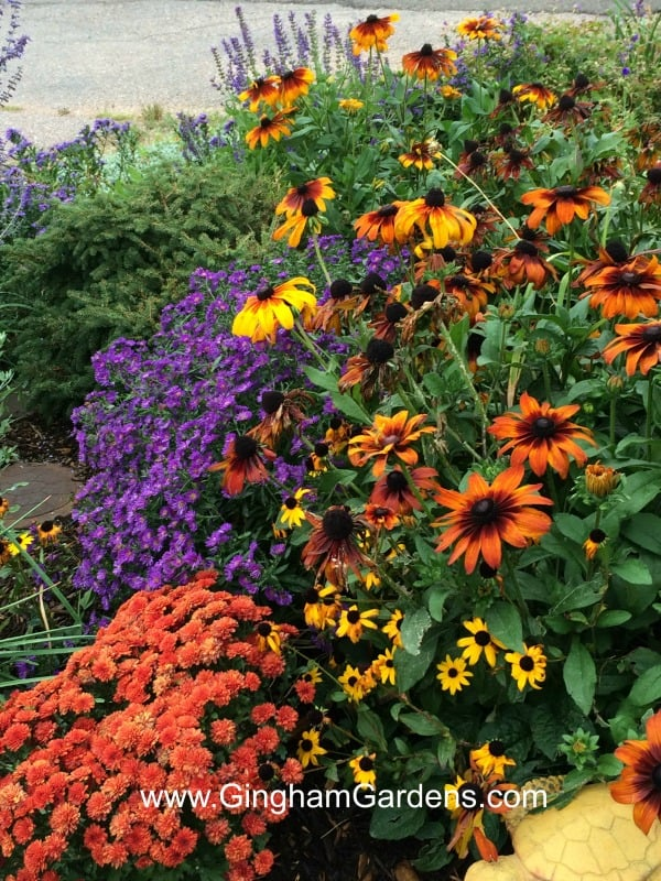 Colorado Fall Flower Garden