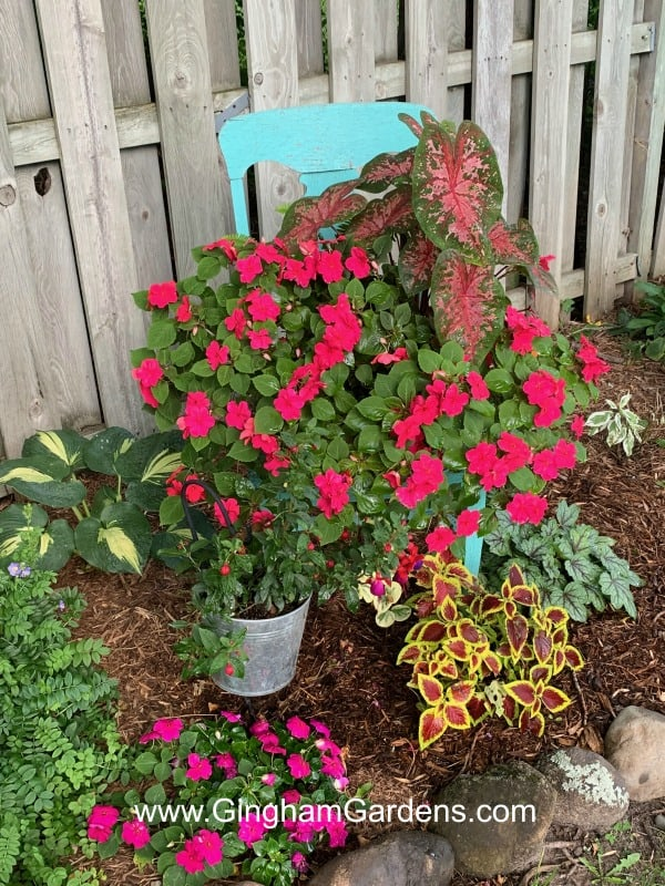 Overwinter Container Plants